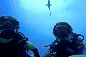 Looking up at a shark.